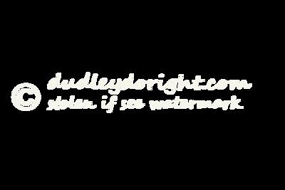 Copyright stolen white