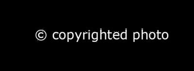 Copy-hor-RO
