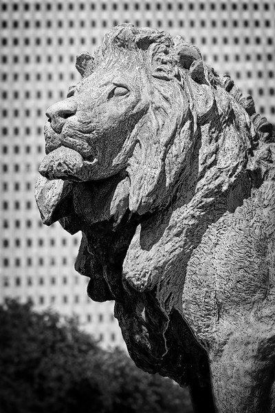Art Institute of Chicago Lion