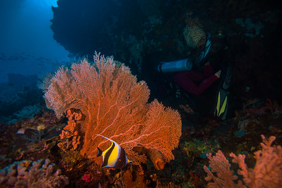 Taken from Tomajiko divesite in Hiri Island, North Maluku, Indonesia during our 8D7N excursion in March 2018