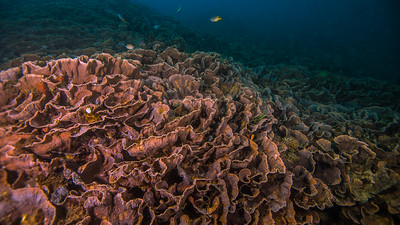 Taken from Taman Nukila divesite in Ternate Island, North Maluku, Indonesia during our 8D7N excursion in March 2018