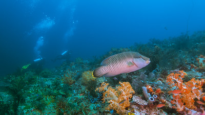 The liveaboard diving adventure to the south of Rinca Island and Komodo island in September 2018