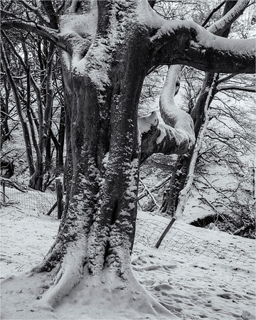 Reaching Out Through The Snow