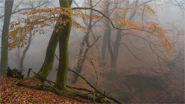 Magic In The Mist II