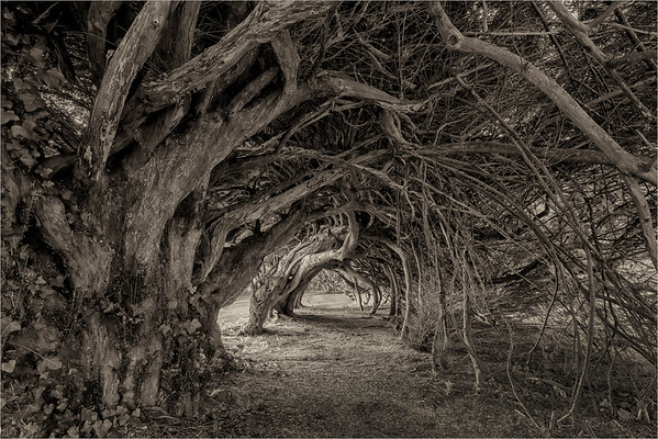 Through The Yews