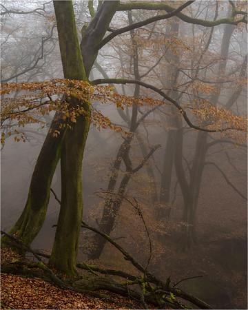 Magic In The Mist I