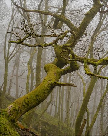 Twisting Through The Mist