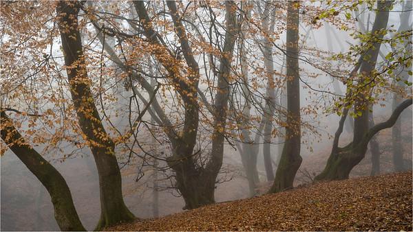 Magic In The Mist III