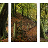 Pit Wood Triptych