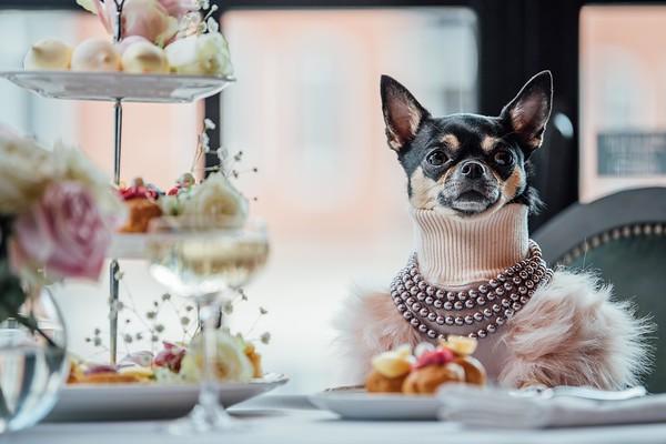 Hotels.com - Canine Critic Campaign