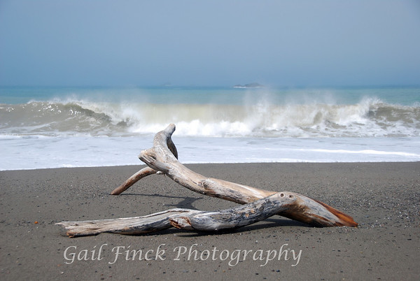 DRIFTWOOD ON THE BEACH - Northern California Coast