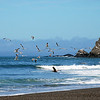 SEAGULLS AND A LONE PELICAN FLY ABOVE THE SURF - Goat Rock Beach - North of San Francisco between Bodega Bay and Jenner