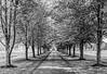 TreeLined-