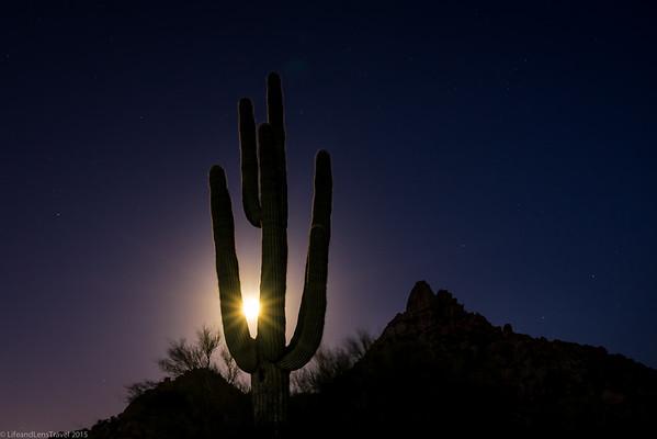 Saguaro in Full Moon