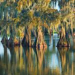 Cypress Island Preserve/Lake Martin, Lafayette, LA