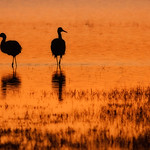 Bosque Del Apache Wildlife Refuge, NM