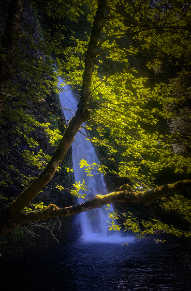 Lower Horsetail Falls, Oregon