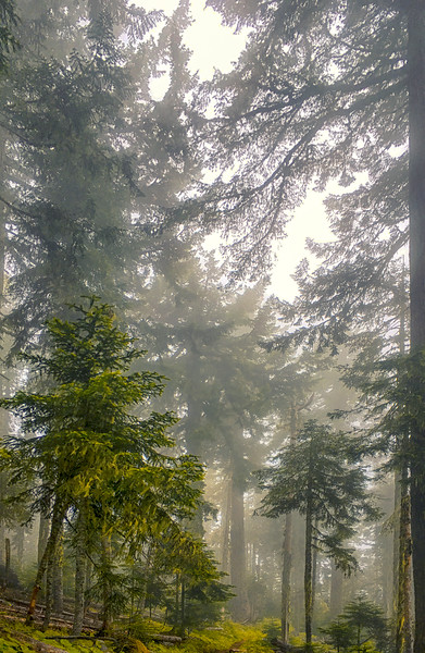 Alpine Trail, near Oakridge, OR
