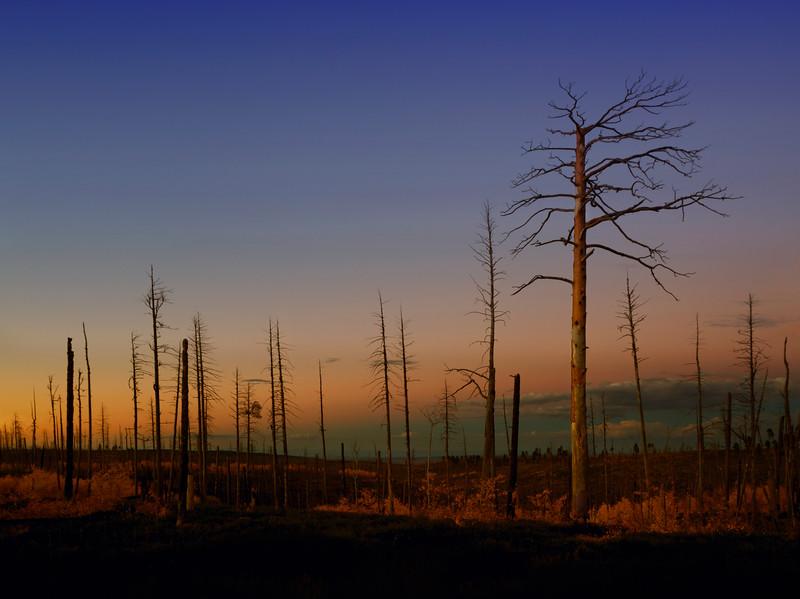 Kaibab National Forest, AZ