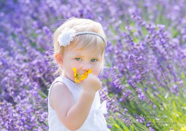 Kleinkind riecht an Blumen vor Lavendel Lavendelfeld - Fotograf Matthias Michel