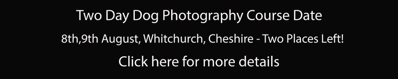 Dog Photography Course UK