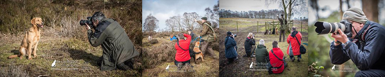 Dog Photography Courses by The Dog Photographer