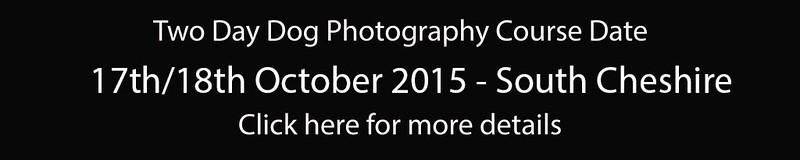 Dog Photography Course