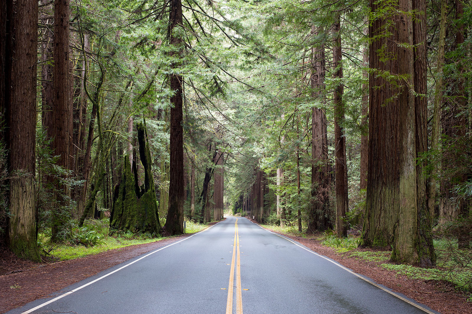 Redwood Grove on Highway 128