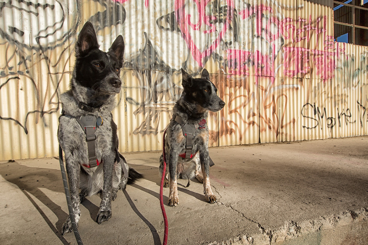 Graffiti dogs