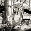 Celloscape : Forest