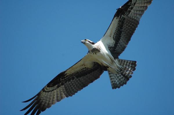 Birds & Wildlife