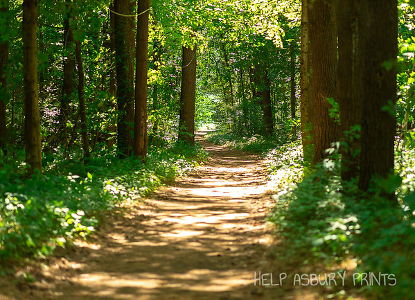 Cole's Woods (Glens Falls, NY)