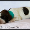 Teal-Girl-2-Weeks-Old
