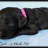Pink-Girl-3-Weeks-Old