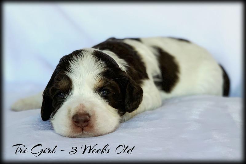 Tri-Girl-3-Weeks-Old
