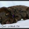 Purple-Girl-3-Weeks-Old