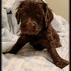 Teal-Girl-5-Weeks-Old