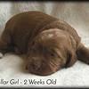 no-collar-girl---2-weeks_med-4