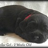 red-collar-girl---2-weeks_med-5