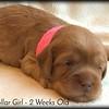 pink-collar-girl---2-weeks_med-5