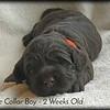 orange-collar-boy---2-weeks_med-3