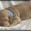 blue-collar-boy---2-weeks_med-9