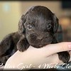 No-Collar-Girl---4-Weeks-Old