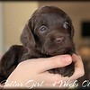 Pink-Collar-Girl---4-Weeks-Old