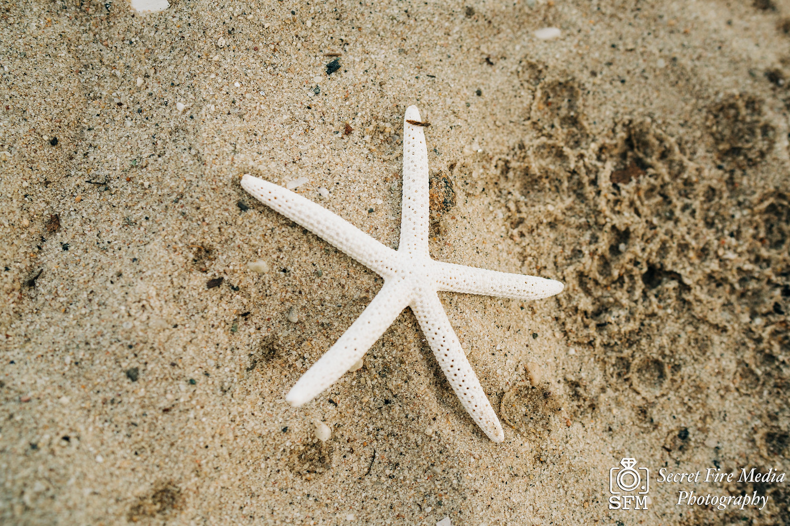 Starfish shell at a ceremony on a beach at a Hudson Valley Wedding At Mamaroneck Beach and Yatch Club