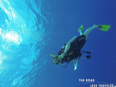 Watermarked Florida: Jr. Diver Web Photos