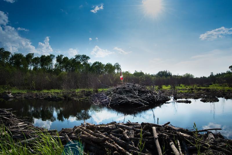 Canadian Beaver Dam
