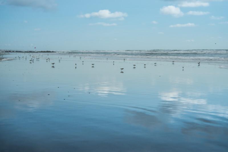 Sea Gull Reflections