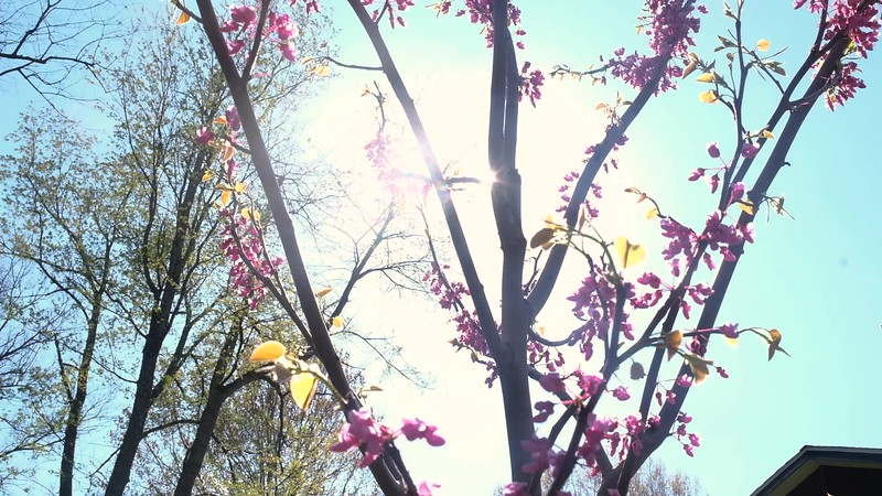 Blooming April 16 2020