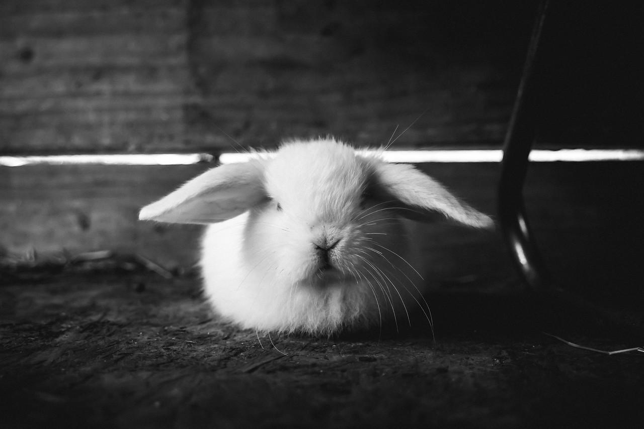 Displeased Bunny
